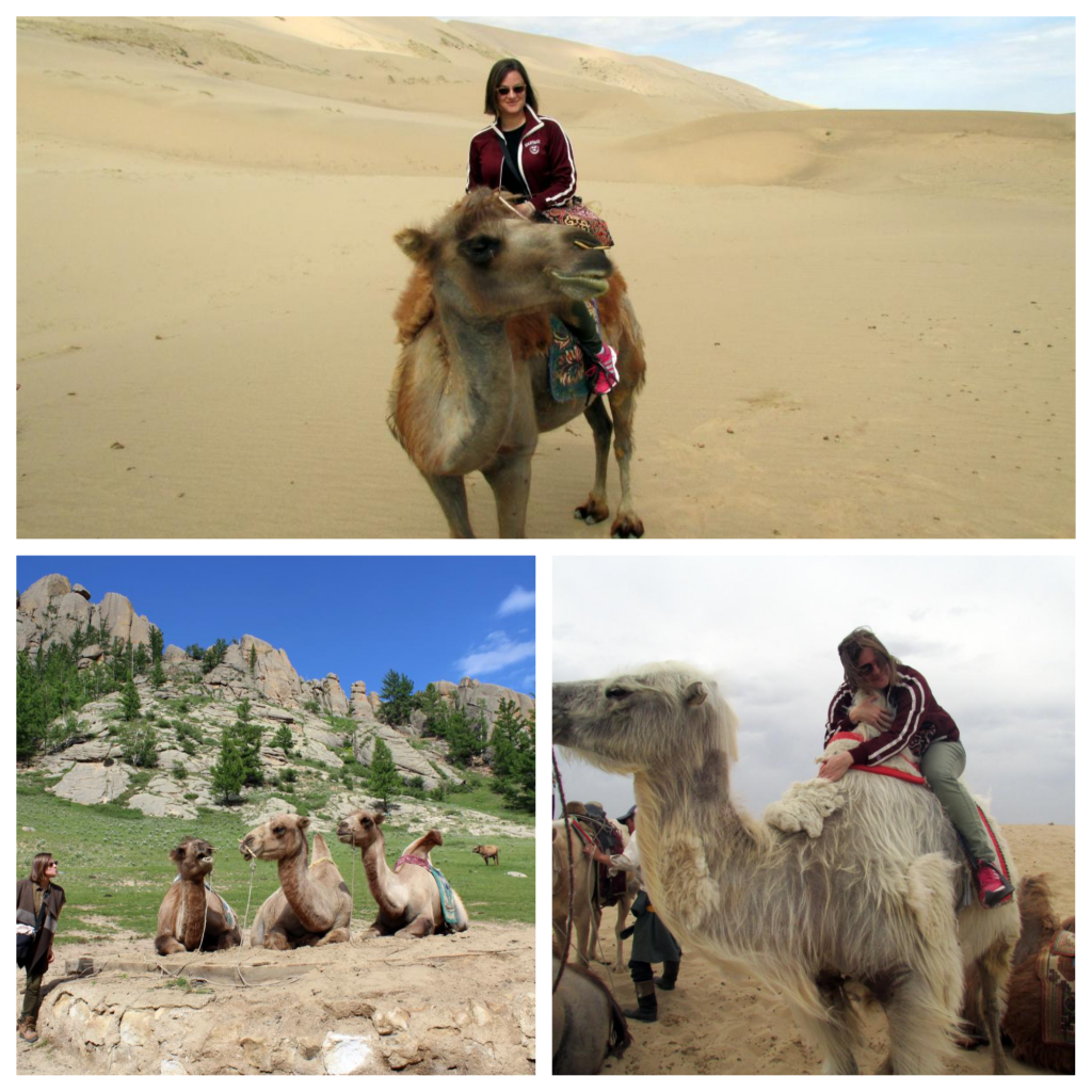 Camel time in Mongolia (Photos: Emily O'Dell)