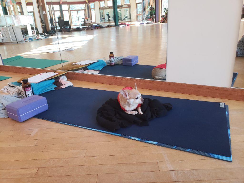 Anubis yoga