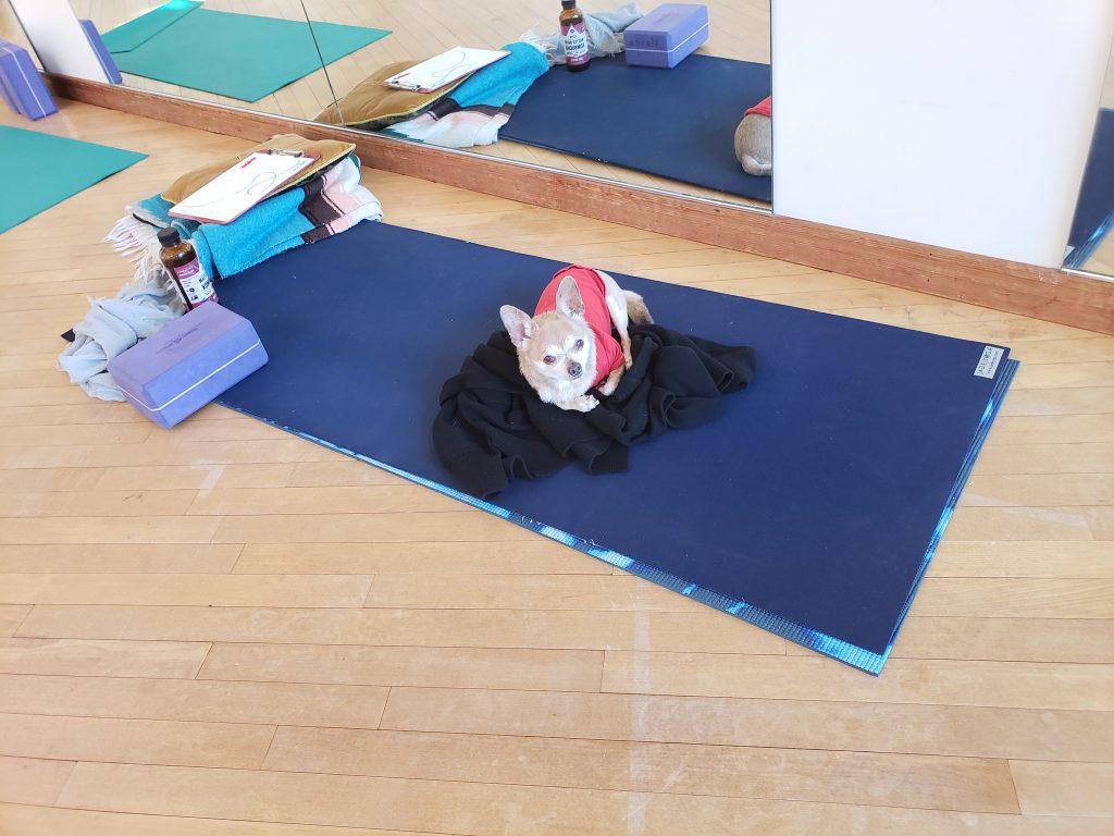 Anubis the yogi