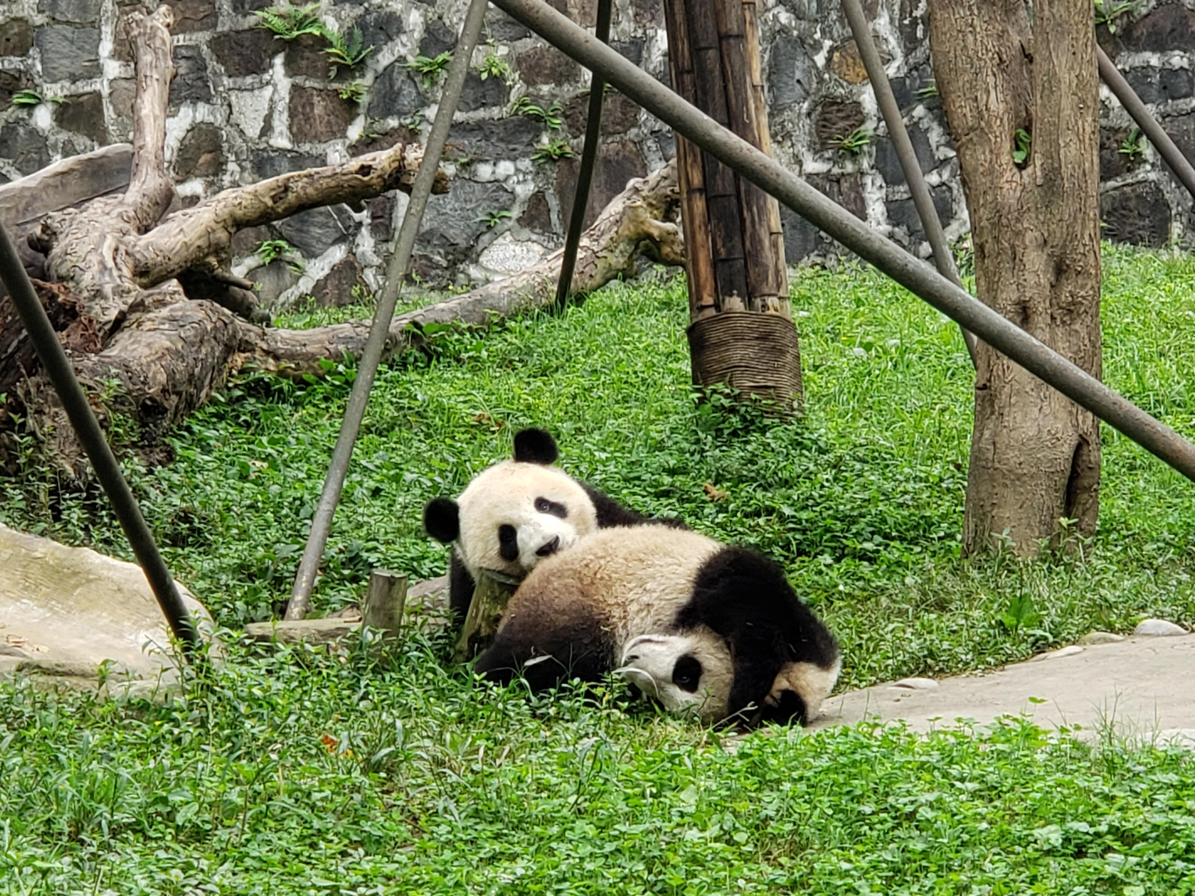 panda play 1