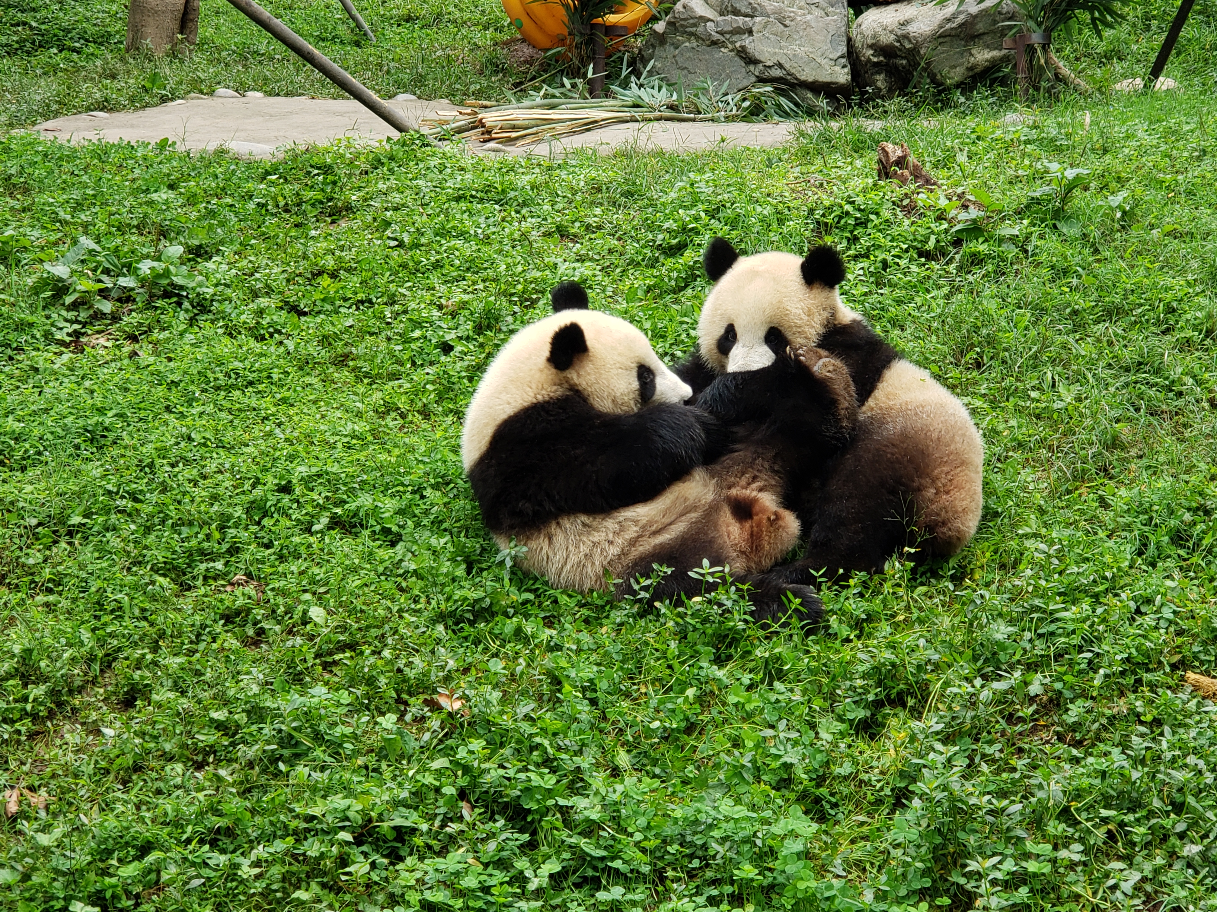 panda play 2